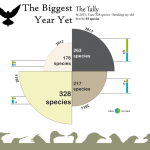 Big Year 2015 Infographic Promo Image