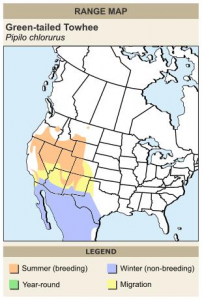 Green-tailed Towhee Map