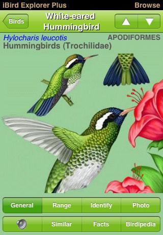 ibird-bird